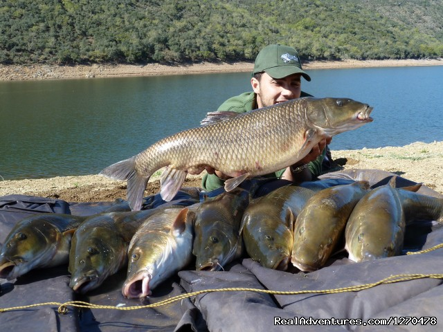 Image #3 of 4 - Fishing Barbel Comizo