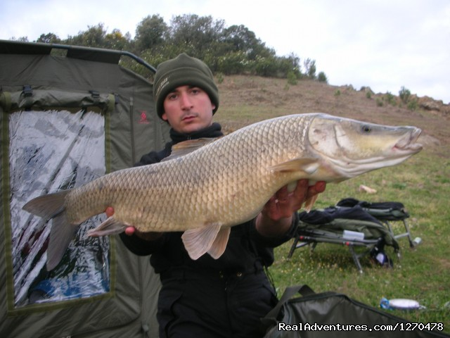 Image #4 of 4 - Fishing Barbel Comizo