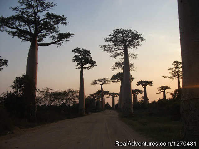 Avenue of Baobab - Discovery Tour of MADAGASCAR