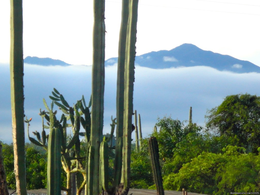 A View from the Dining Terrace | Image #16/20 | Oaxaca Adventure Stay