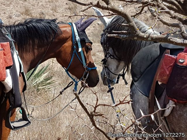 Horse Love - Oaxaca Adventure Stay