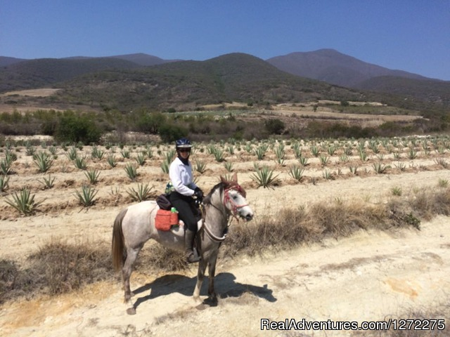 Agave fields - Oaxaca Adventure Stay