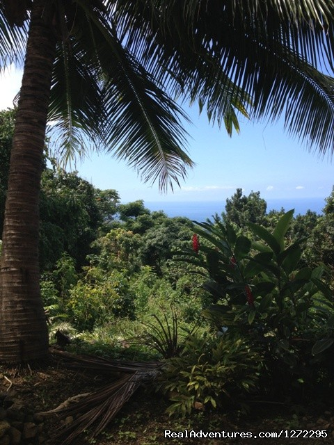 View - Start your adventure at Tiki Wa Guest House