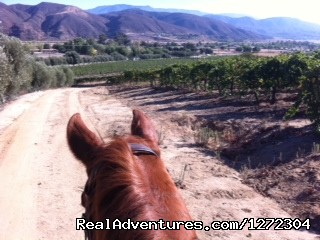 Horseback Riding Wine Tasting Tour
