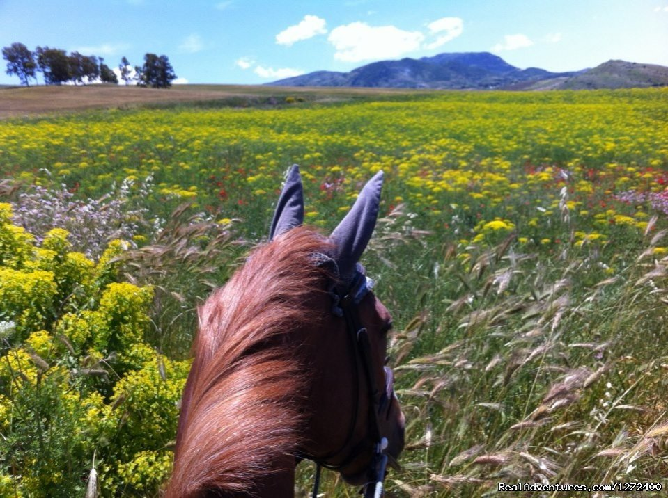 Riding | Image #11/25 | Beautiful Farm Holiday in Corleone, Sicily