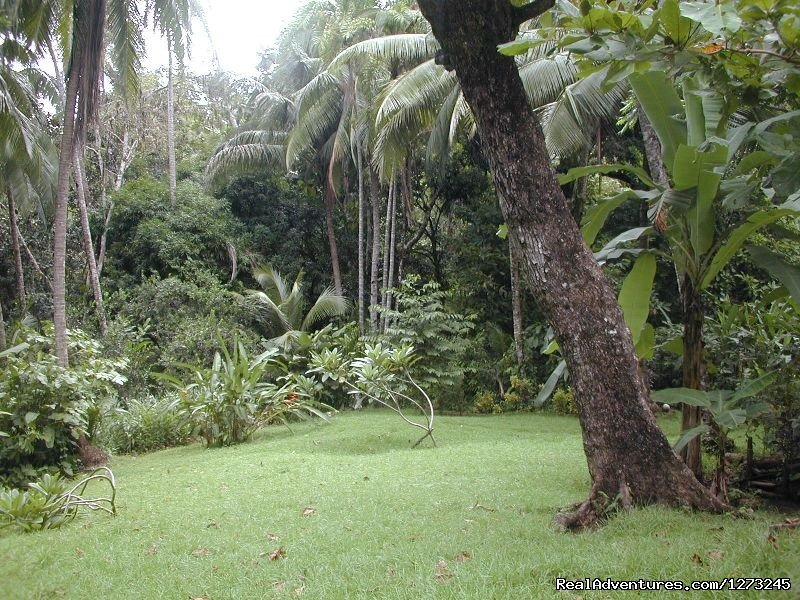 Private Tropical Fjord Beach Primary Rainforest Rincon de Osa, Costa Rica Vacation Rentals