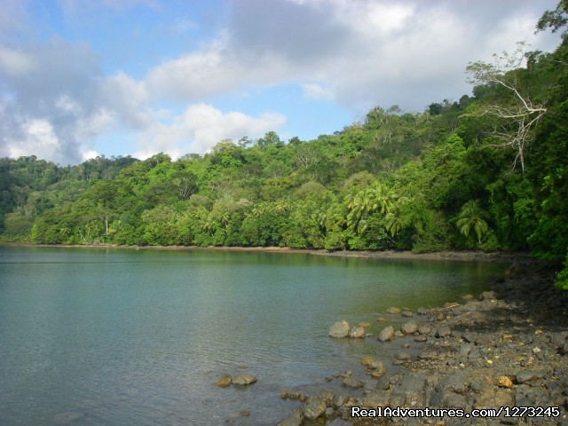 - Private Tropical Fjord Beach Primary Rainforest