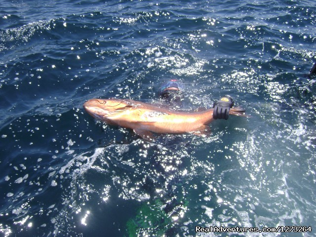 Image #2 of 5 - Panama Blueturtle Spearfishing Safari