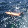 Panama Blueturtle Spearfishing Safari