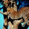 Tanzania Odyssey London, Tanzania Hotels & Resorts