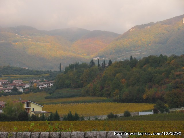 Negrar Valley - Mario Apartment -Valpolicella wine region