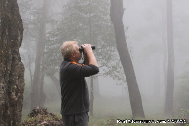 Birding in the mist - Wildlife & Birding Adventures