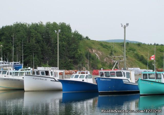 Nova Scotia Outer Islands Seakayak Freewheeling South