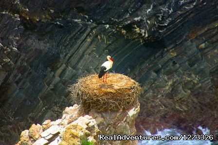 Storks on the cliffs - Portugal Wild Coast Cycling