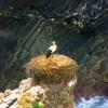 Storks on the cliffs