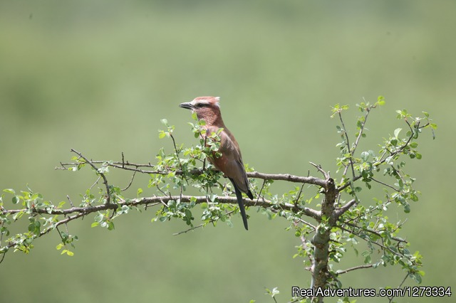 ETHIOPIA, the birder's paradise - Royal Ethiopia Tours