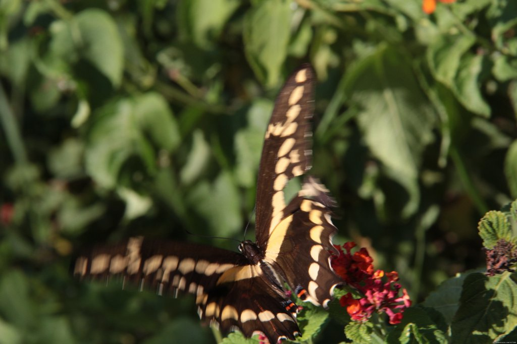 Pretty Butterfly at Oleander Acres Resort | Image #7/7 | Spend Winter In The Sun At Oleander Acres Resort