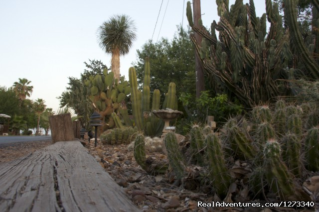 Cactus Garden (#2 of 8) - Spend Winter In The Sun At Oleander Acres Resort