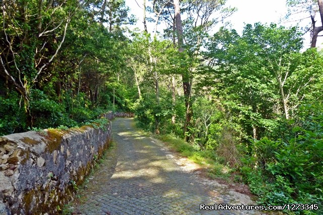 Sintra roads - Sintra Cycling - Day Tour