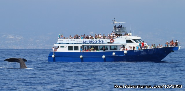 The motorship Corsara - Whale Watching Europe
