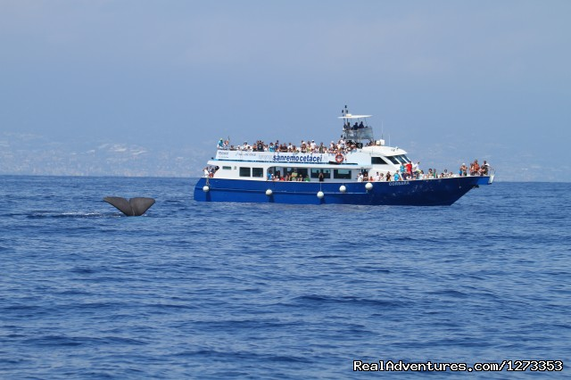 Image #1 of 7 - Whale Watching Europe
