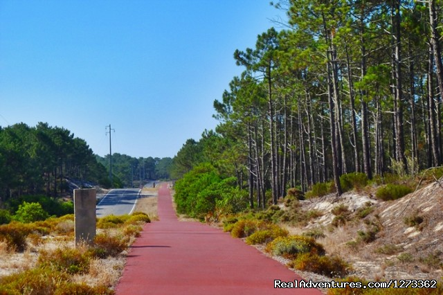 Cycle line - Atlantic West Coast  & Sintra Cycling (road)