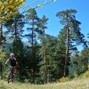 Epic MTBike trough Iberian Mountains and Forests
