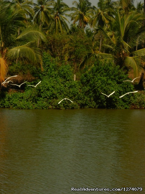 Om lake resort: Birds in our Lake
