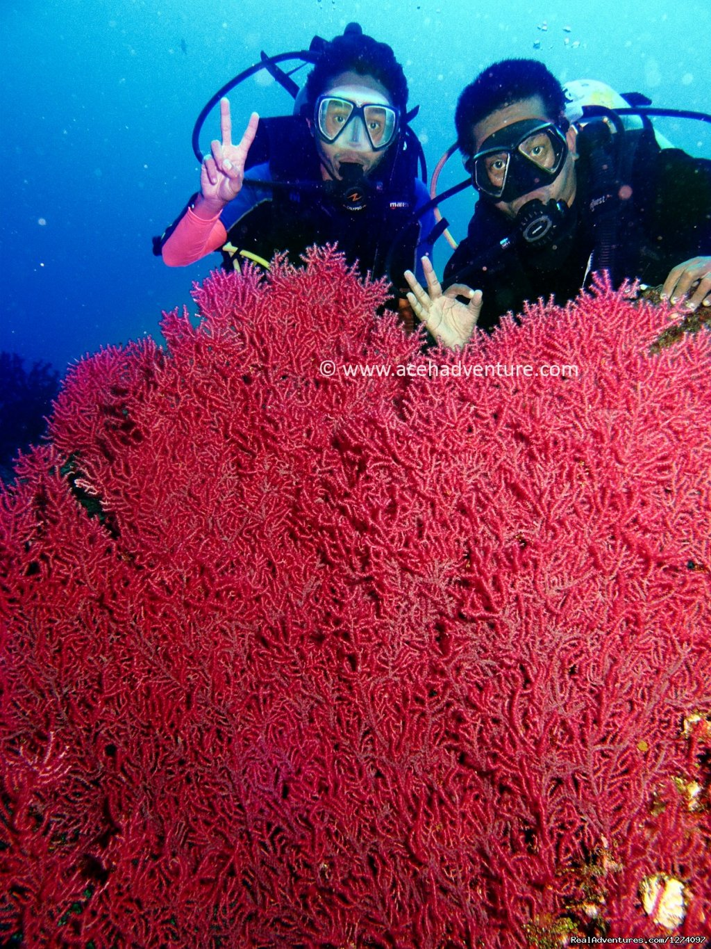 With sea fan | Image #2/4 | Pulau Weh Dive Packages