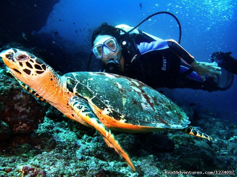 with Mr. Turtle | Image #4/4 | Pulau Weh Dive Packages