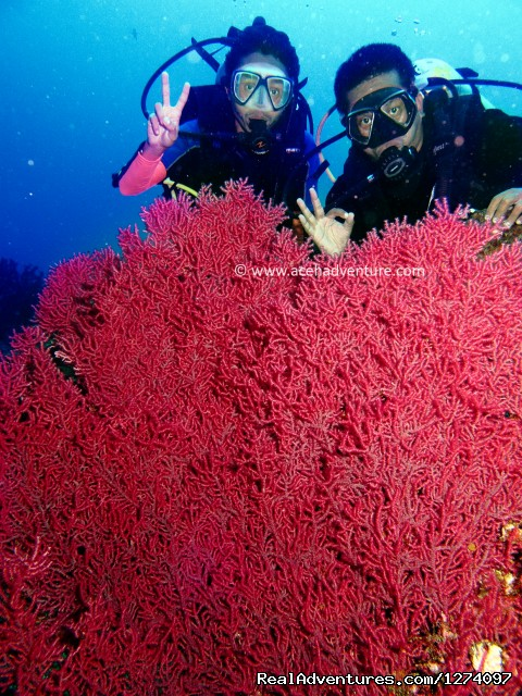 With sea fan - Pulau Weh Dive Packages