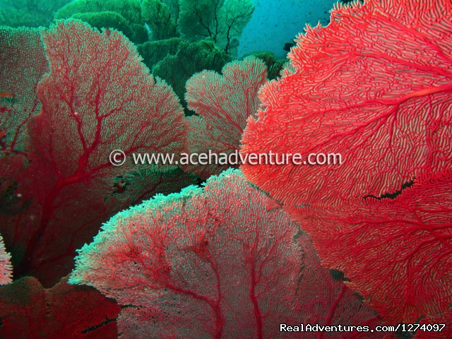 Jungle Of Sea Fan - Pulau Weh Dive Packages