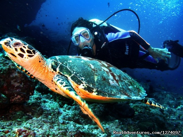 with Mr. Turtle - Pulau Weh Dive Packages