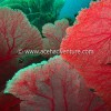 Pulau Weh Dive Packages Jungle Of Sea Fan