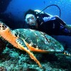 Pulau Weh Dive Packages with Mr. Turtle