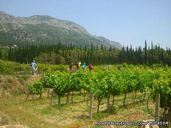 Dubrovnik Countryside Wine Tasting & Bike Ride Biking in Konavle Region