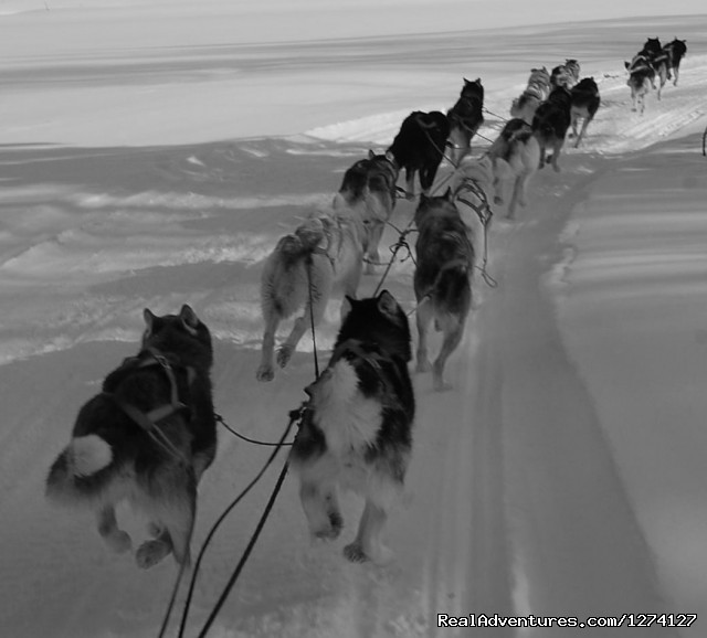 Zooming down the trail - Dog Sled Adventures
