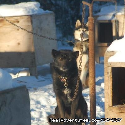 Around the yard - Dog Sled Adventures