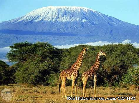 View of Mt. Kilimanjaro - Inspiring your spirit of adventure