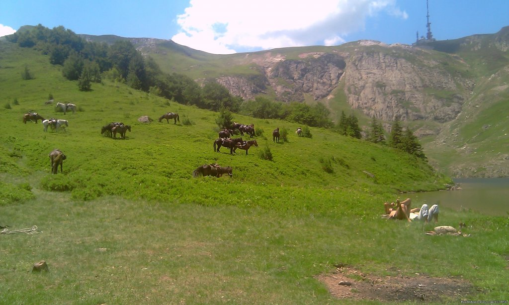 Bjelasica meadows | Image #3/14 | Horse riding at only ecological country,Montenegro