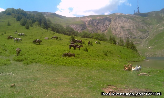 Horse riding at only ecological country,Montenegro Bjelasica meadows