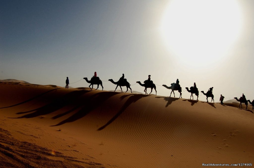 Camels Ride in desert Sahara | Image #3/7 | Morocco Dunes Tours