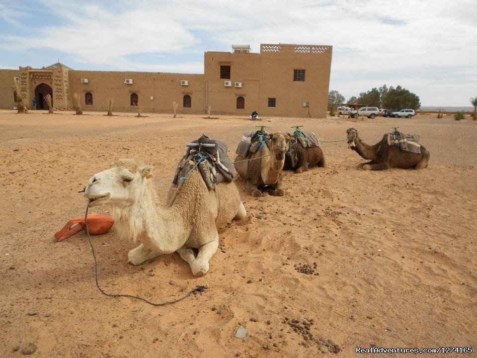 Image #7/7 | Morocco Dunes Tours