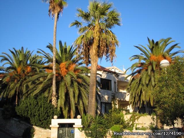 Villa Domus Marini+palm Trees (#26 of 26) - Villa Domus Marini