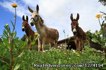 3h to 1 Day Donkey Hike (#3 of 3) - Donkey Hike Portugal - Best Nature Experience