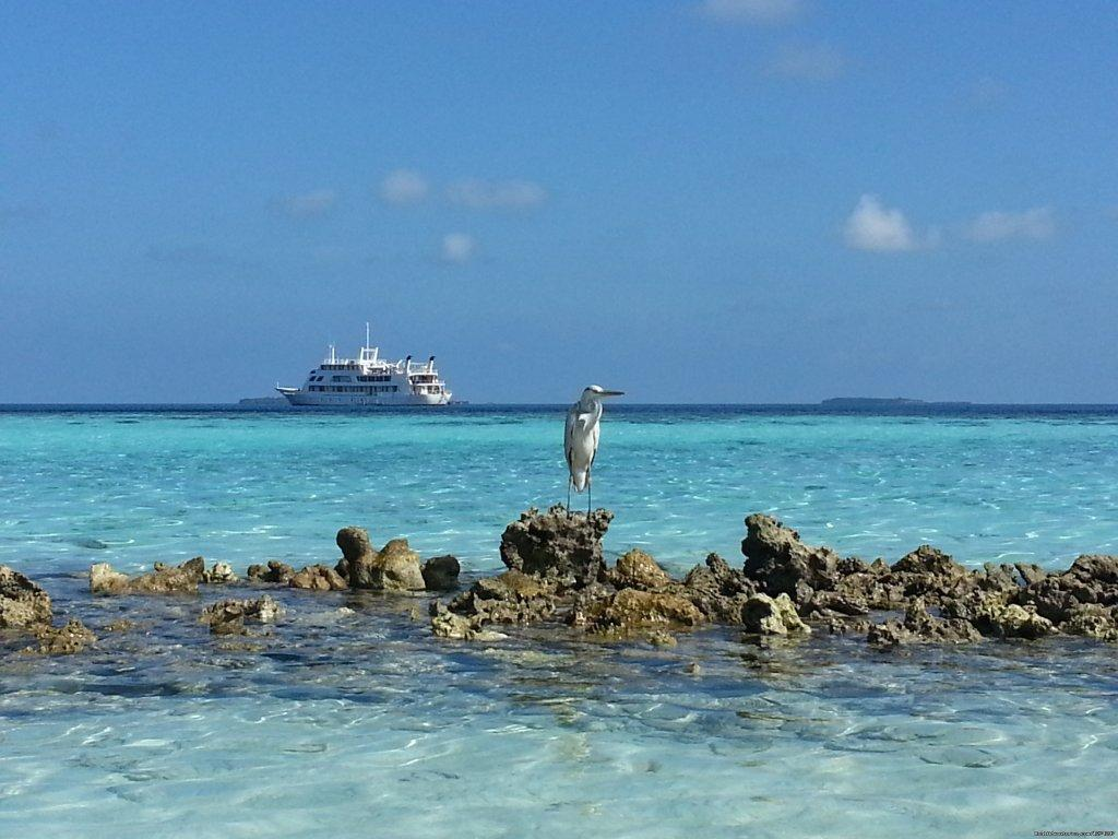 Yasawa Princess | Image #10/14 | Explore the Maldives on MV Yasawa Princess