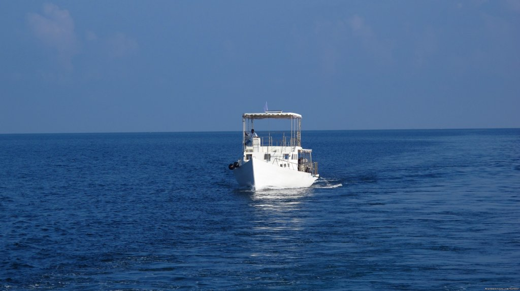 Dolphin Dhoni | Image #13/14 | Explore the Maldives on MV Yasawa Princess