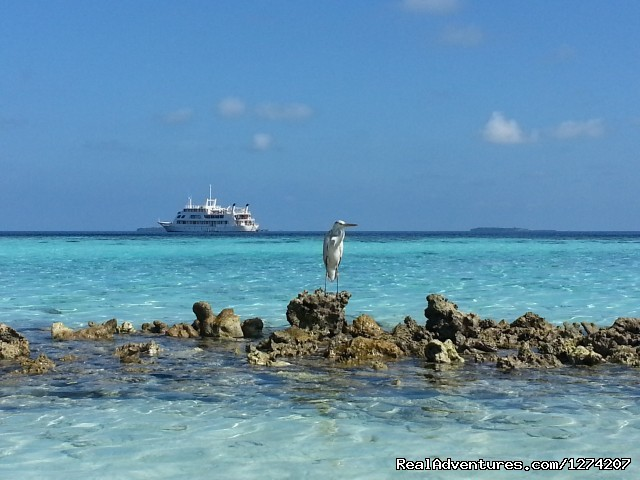 Yasawa Princess - Explore the Maldives on Yasawa Princess