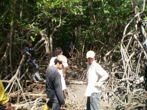 Mangrove Conservation Volunteer Work Guayaquil, Ecuador Volunteer Vacations