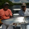 Nature:Boat Assisted,Photo,Sunset,Birding,EcoTours Small River Tarpon